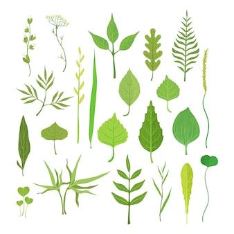 Frische grüne blätter von bäumen, sträuchern und gras für etikettendesign.