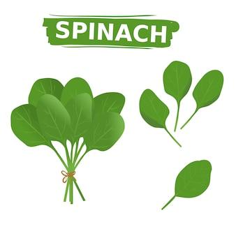 Frische grüne spinatsammlung stellte auf lokalisierten weißen hintergrund ein