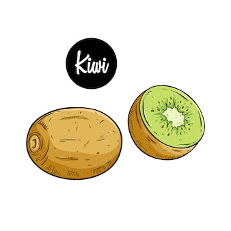 Frische kiwi mit farbiger hand gezeichnet oder skizzenart