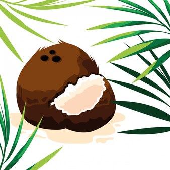 Frische kokosnussfrucht