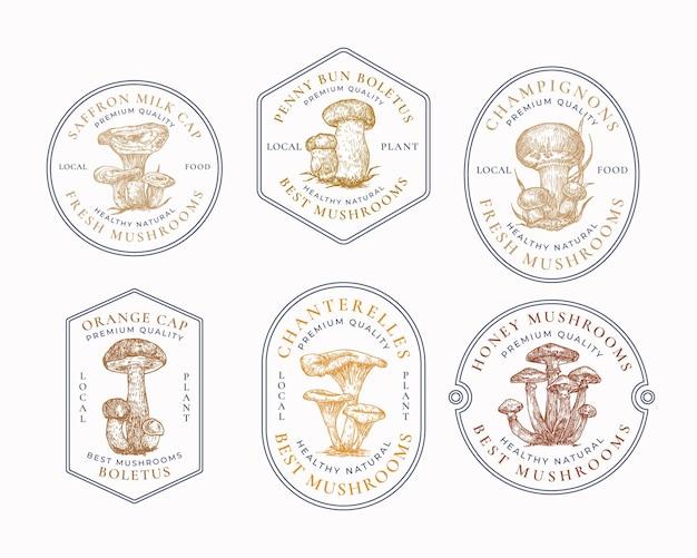 Frische lokale pilze abstrakte rahmenzeichensymbole oder logoschablonensammlung handgezeichnete bunte ...