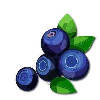 Frische saftige blaubeeren mit den grünen blättern getrennt