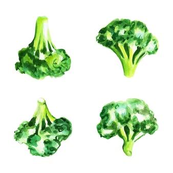 Frischer brokkoli-set. handgezeichnete aquarellillustration, isoliert. vektor-illustration