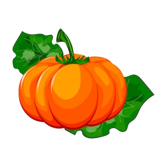 Frischer orange kürbis lokalisiert auf weißem hintergrund