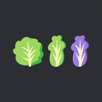 Frischer organischer kopfsalatlebensmittelvektor