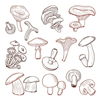 Frisches essen von pilzen. gezeichnete illustration des naturvektors hand.