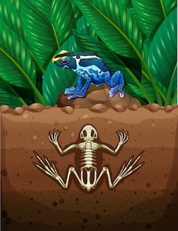 Frosch auf dem boden und fossil u-bahn