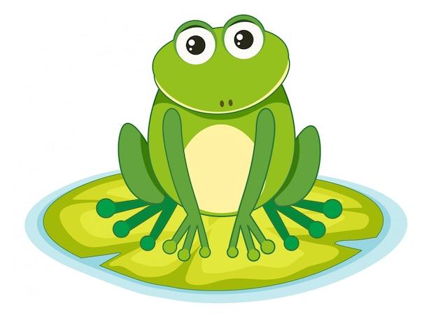 Frosch auf einem lilypad