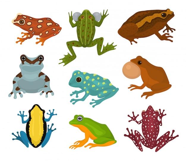Froschvektor froschcharakter und karikatur-amphibienkröte in tropischer naturillustrationssatz des exotischen baumfrosches der fauna und des ochsenfrosches lokalisiert auf weiß
