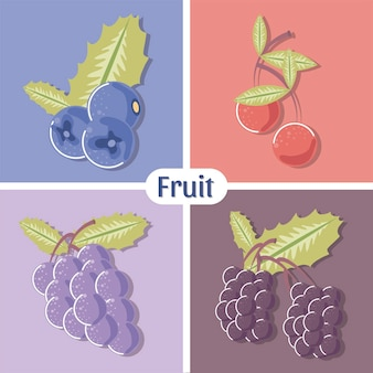 Früchte blaubeertrauben kirsche und himbeere frische illustration