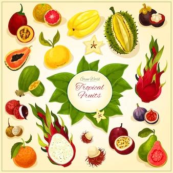 Früchte von isoliertem tropischem und exotischem saftigem frischem durian, drachenfrucht, guave, litschi, feijoa, passionsfrucht maracuya, feigen und rambutan, mangostan und orange, papaya