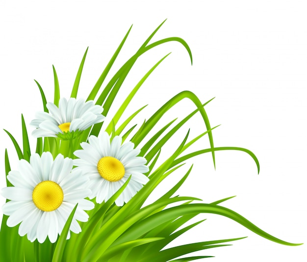 Frühling mit gänseblümchen und frischem grünem gras.