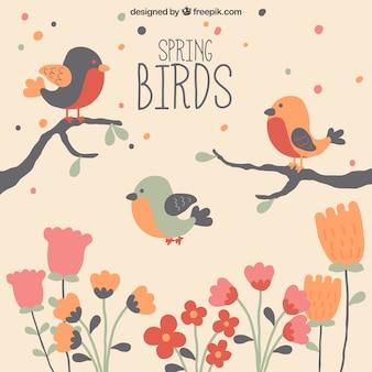 Frühling vögel hintergrund