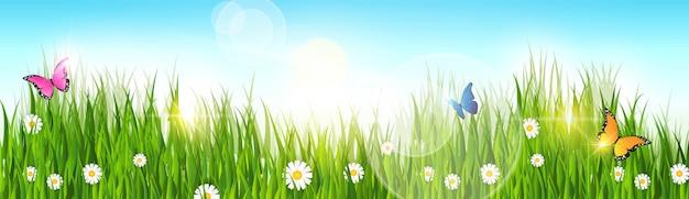 Frühlings-landschaftsgrünes gras-blauer himmel-fahne