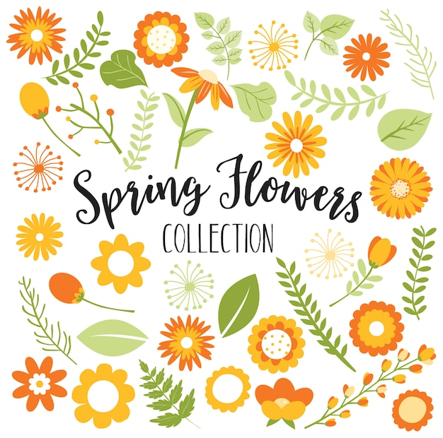 Frühlings- oder fallblumensammlung