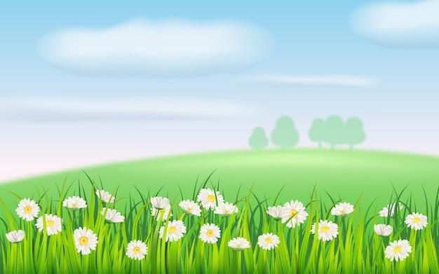 Frühlingsfeld der blumen der gänseblümchen, der kamille und des grünen saftigen grases, der wiese, des blauen himmels, der weißen wolken