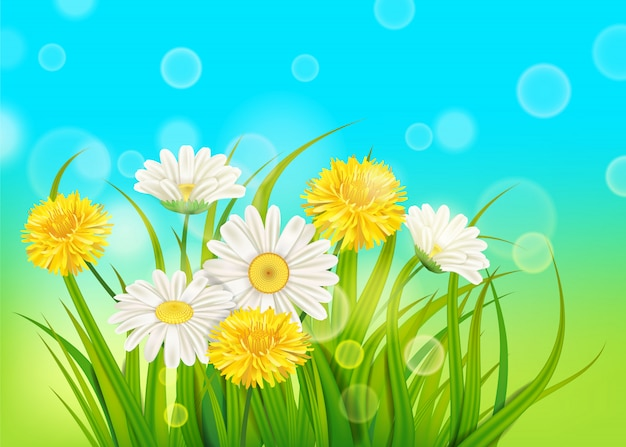 Frühlingsgänseblümchen und frisches grünes gras des löwenzahnhintergrundes, angenehme saftige frühlingsfarben