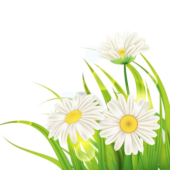 Frühlingsgänseblümchenhintergrund frisches grünes gras, angenehme saftige frühlingsfarben