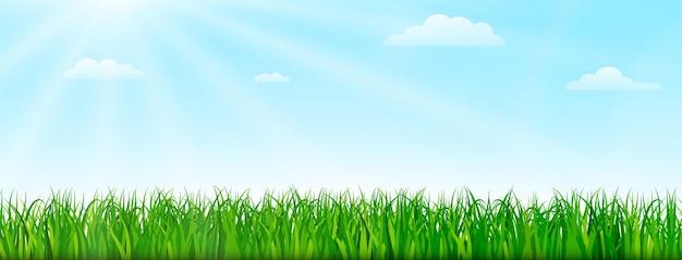 Frühlingsnaturhintergrund mit grünem gras und blauem himmel. designillustration