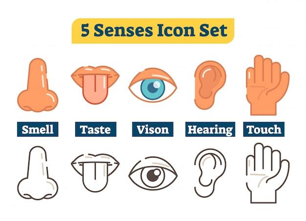 Fünf menschliche körper sinne. vektor-illustration icon-sammlung.