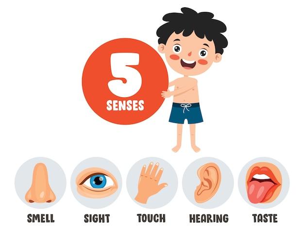 Fünf-sinne-vorlage mit menschlichen organen
