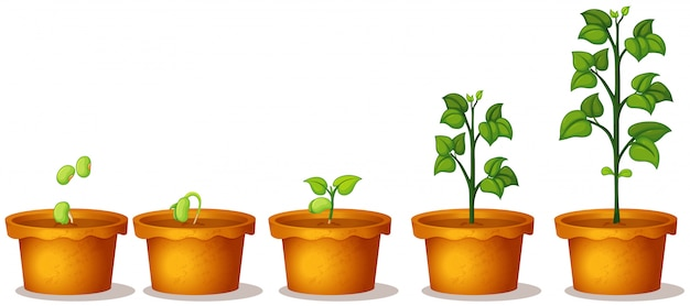 Fünf topfpflanzen mit grünen pflanzen auf weißem hintergrund