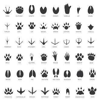 Fußabdrücke von tieren