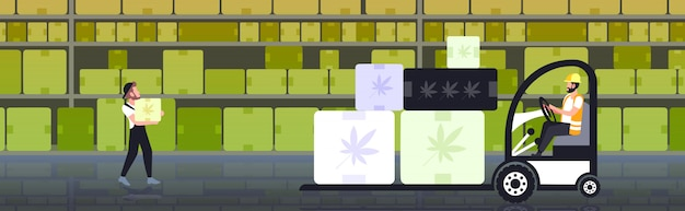 Gabelstaplerfahrer, der pappkartons mit medizinischem marihuana des modernen marihuana-lagerhauses des cannabisblatts trägt, das horizontales geschäftsgeschäft hanflieferkonzept horizontal ist