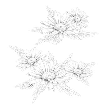 Gänseblümchen-blumenzeichnung.