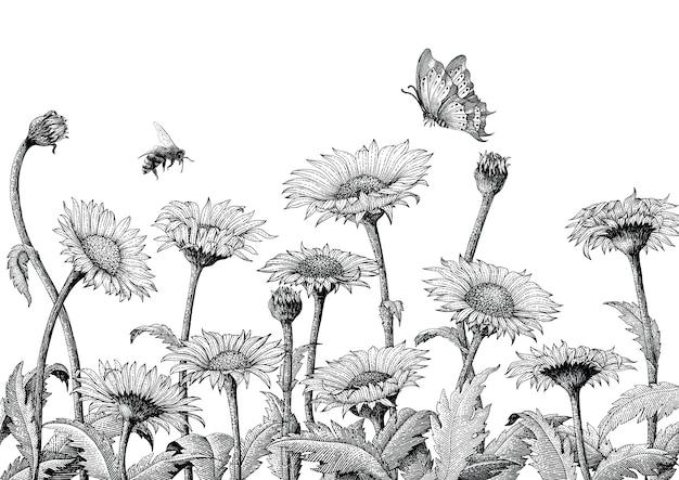 Gänseblümchenfeldhand-zeichnungsgravurillustration lokalisiert auf weißem hintergrund, gänseblümchenfeld-weinlesestil