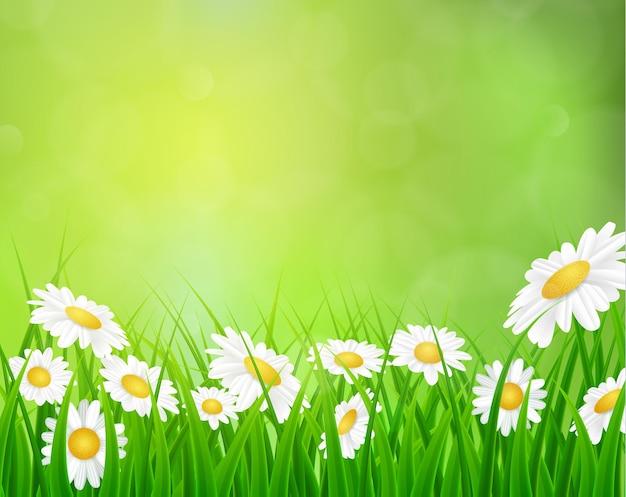 Gänseblümchenvektorhintergrund-sommerdesign