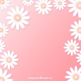 Gänseblümchen Hintergrund