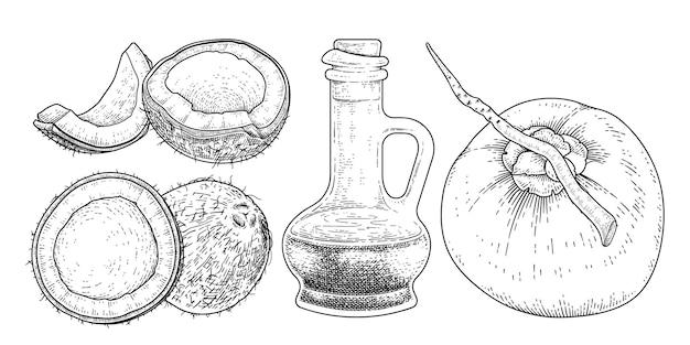 Ganze halbe schale fleisch und öl der kokosnuss handgezeichnete vektor-retro-illustration