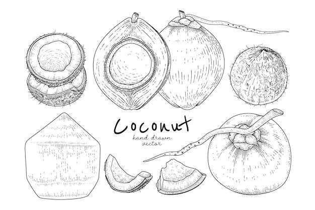 Ganze halbe schale und fleisch der kokosnuss handgezeichnete hand gezeichnete skizze im retro-stil
