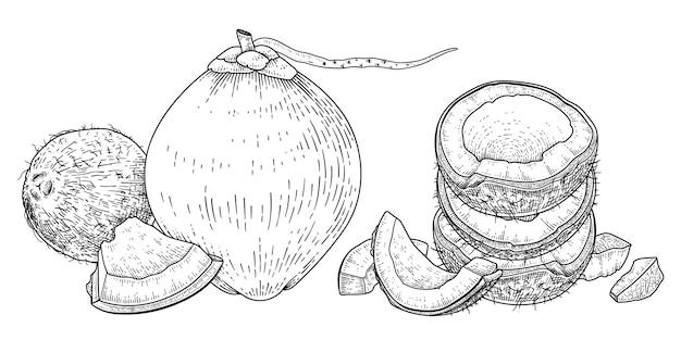 Ganze halbe schale und fleisch der kokosnuss handgezeichnete retro-vektorillustration