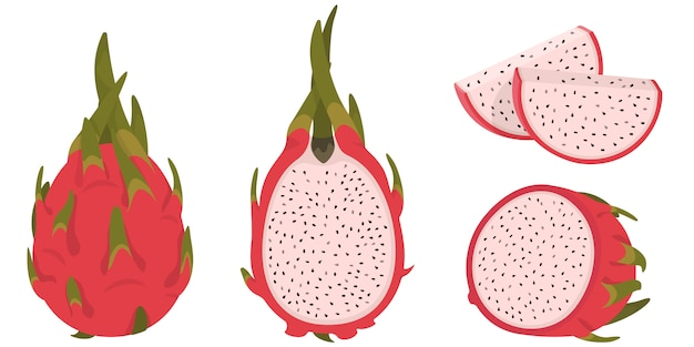 Ganze und geschnittene pitaya. drachenfrucht im cartoon-stil.