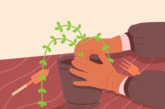 Gartenblume pflanzen. gartenarbeit, landwirtschaft, landwirtschaftliches hobby und beruf. nahaufnahmebild eines gärtners, der blumen in einem blumentopf umpflanzt. flache cartoon-vektor-illustration von händen, die eine pflanze halten.
