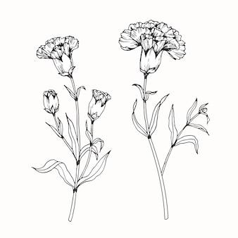Gartennelkenblumenzeichnungsillustration