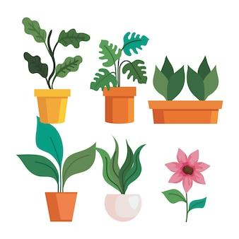 Gartenpflanzen in töpfen und blumendesign, gartenpflanzung und naturthema