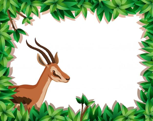 Gazelle im naturrahmen