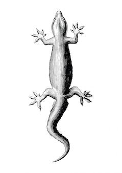 Gecko handzeichnung vintage-stil