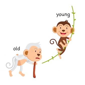 Gegenüber alter und junger illustration