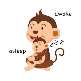 Gegenüber schlafend und wach