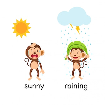 Gegenüber worte sonnig und regnerisch
