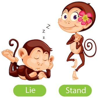 Gegenüberliegende wörter mit lüge und stand