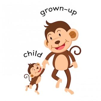 Gegenwörter kind und erwachsener