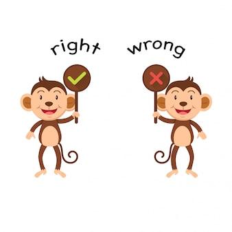 Gegenwörter richtig und falsch