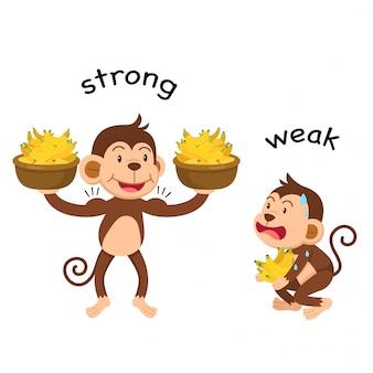 Gegenwörter stark und schwach