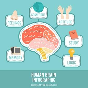 Gehirn-infografik mit verschiedenen themen
