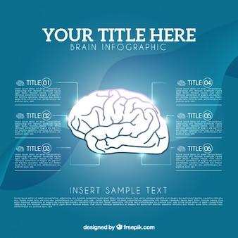 Gehirn-infografik-vorlage in realistischen stil